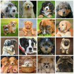 Hundetransportbox-Hundegröße